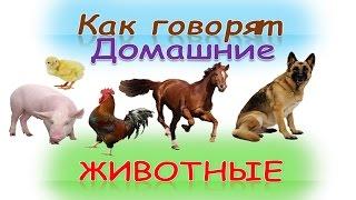 Деревяшки - Радуга - Развивающие мультфильмы для.